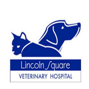 best-veterinarians-new-york-ny-usa