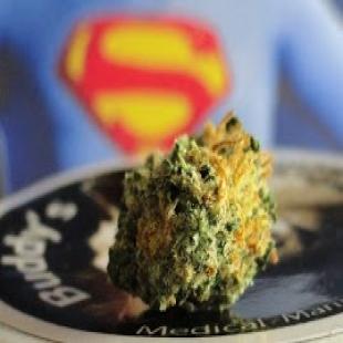 buddy-s-cannabis