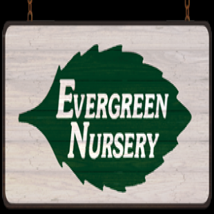 Oceanside Ca Usa 92054 Click Here To Send Us An Email Evergreen Nursery 1 760 754 0340 View Website