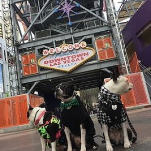 luckypup-dog-training