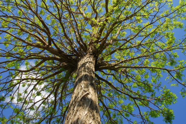 godwin-tree-service