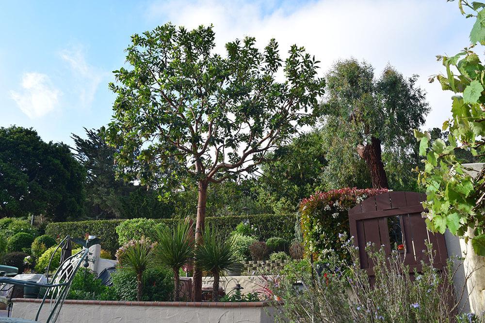 all-around-tree-care