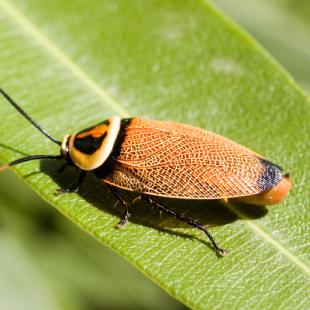 best-termite-control-austin-tx-usa