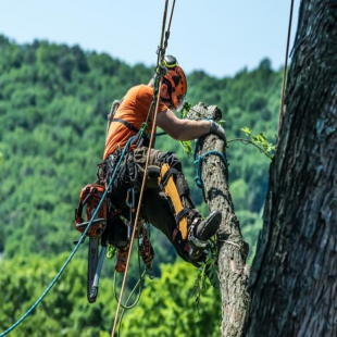 best-arborist-roanoke-va-usa