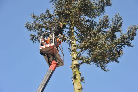 top-tree-service-atlanta-ga-usa